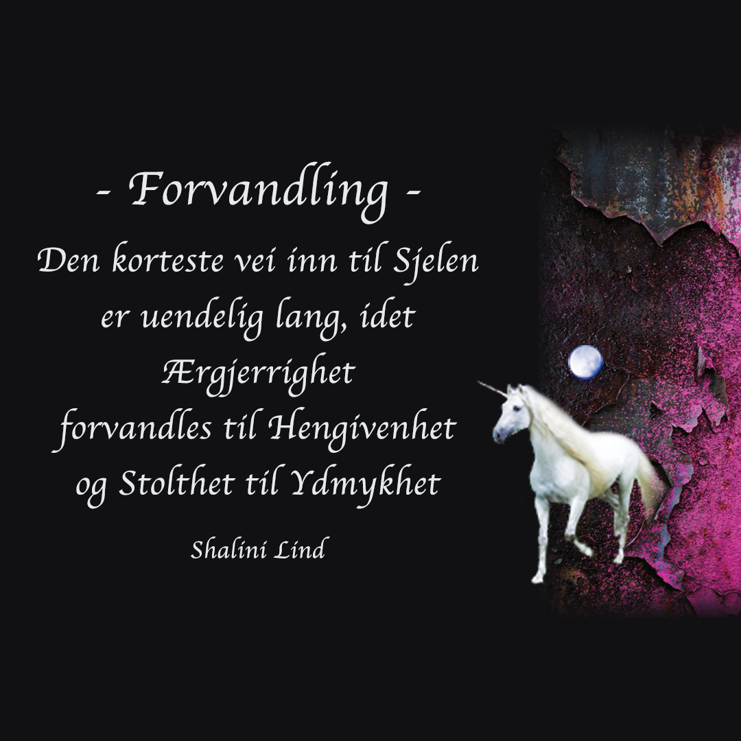 INSTA-forvandling